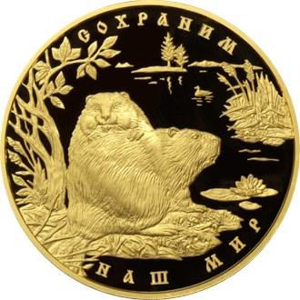10 000 рублей. Речной бобр